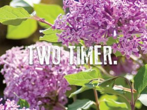 Two Timer Lilac