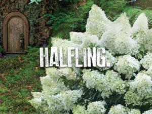 Halfling Hydrangea