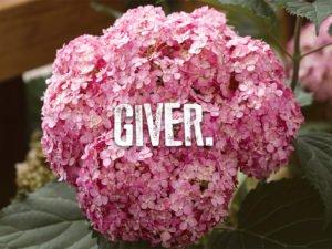 Giver Hydrangea