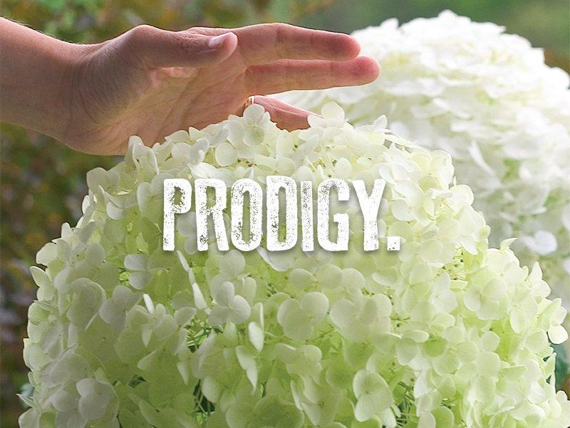 Proven Winners – Flowering Shrubs – Proven Winners