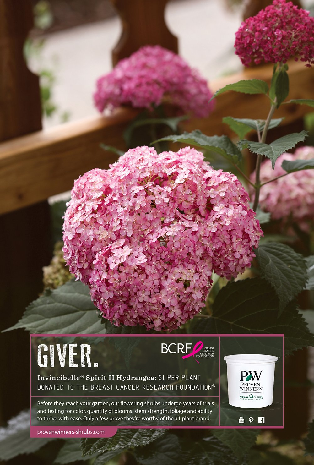 Proven Winners Flowering Shrubs Proven Winners Flowering Shrubs