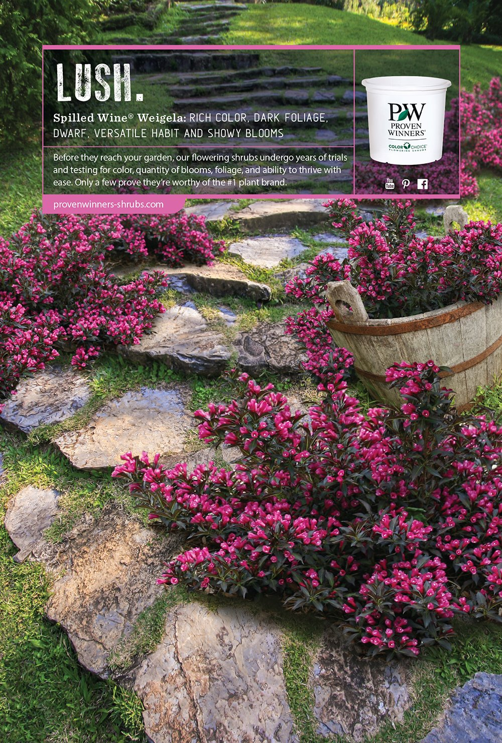 273 & Proven Winners \u2013 Flowering Shrubs \u2013 Proven Winners ...