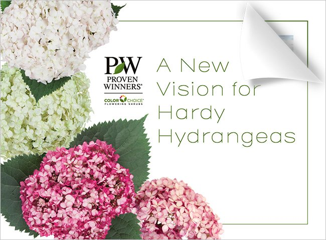 A New Vision for Hardy Hydrangeas brochure cover