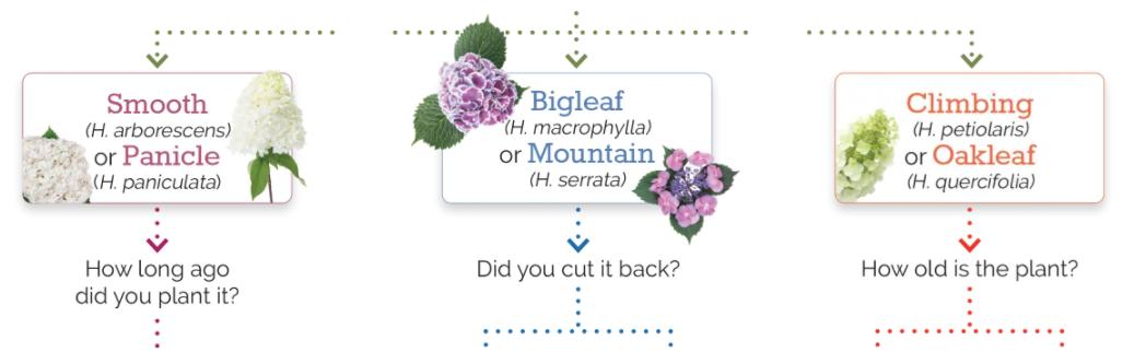 Hydrangea Size Guide Header